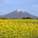 菜の花の開花時期とオススメ観光スポット