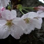 【季語】花冷えの季節という言葉をご存知でしょうか?