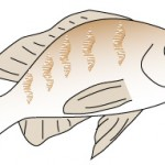 春告魚(はるつげうお)はどの魚のことを言うのでしょうか?
