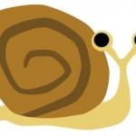 カタツムリとナメクジの違いはあるの?同じ生き物?
