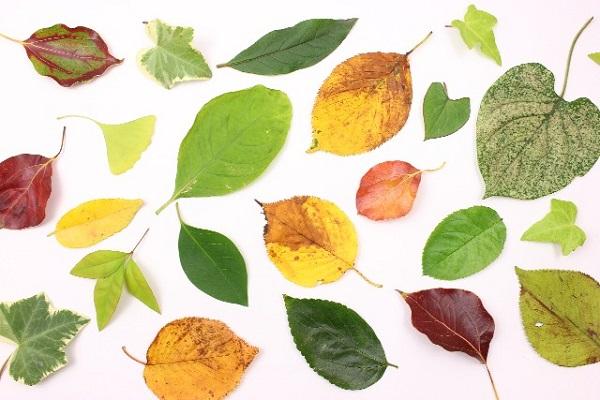 秋らしい画像