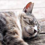 猫の夏バテ症状は嘔吐や下痢?食事や対策は飼い主の責任です