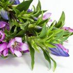 敬老の日に贈る花の種類は花言葉で選ぶべき?