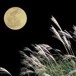 お月見の由来や団子を食べる意味を子どもに伝える方法は?