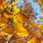 紅葉の候の意味と読み方、使う時期を考える