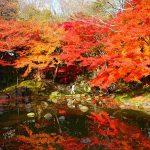 小石川後楽園の紅葉の見頃とライトアップはあるの?【2016年版】
