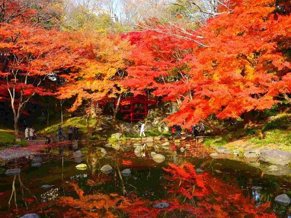小石川後楽園の紅葉の画像
