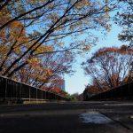 代々木公園の紅葉の見ごろとアクセス情報【2016年版】