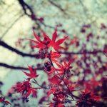 水元公園の紅葉の見ごろとアクセス情報【2016年版】