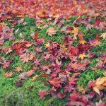 井の頭公園の紅葉の見ごろとアクセス情報