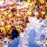 葉っぱが色づくしくみと紅葉が綺麗に赤くなる条件とは?