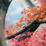 石神井公園の紅葉の見頃はいつ?【2016年版】
