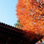 高尾山の紅葉、混雑を避ける為にするべき3つの方法とは?