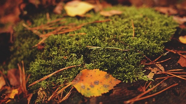 秋の気配の画像