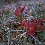 霜寒の候の意味と使う時期はいつからいつまで?