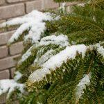 厳寒の候の使う時期と意味、簡単な文例を紹介