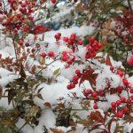 寒風の候を使う時期、意味や簡単な文例とは?