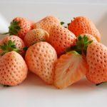 桃薫という品種のいちごの特徴とは?