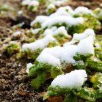雪解の候はどの時期に使う言葉?読み方や意味を解説
