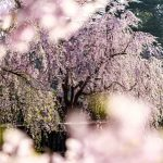 春爛漫の候の意味と使う時期は?簡単な文例を紹介