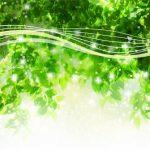 万緑の候はどの時期に使う言葉?意味や文例も