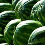 スイカは果物なのか野菜なのかの謎にせまってみました!