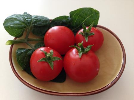 プチトマトの画像