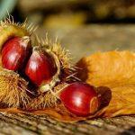 栗は果物と野菜、どっちなの?それともどちらでもないの?