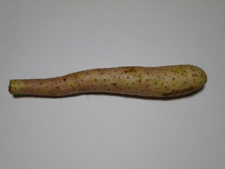 長芋の画像