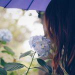 紫陽花が咲かない4つの原因とは?