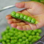 グリーンピースはどのぐらい日持ちする?おすすめの保存は冷凍?